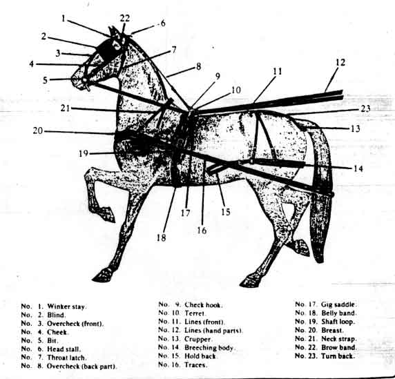 parts of a horse driving harness bridle  parts  get free image about wiring diagram